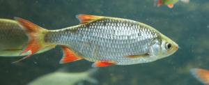 Ön szerint melyik legyen az év hala?