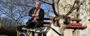 Két keréken, de boldogan gurul a lebénult szolnoki kutyus