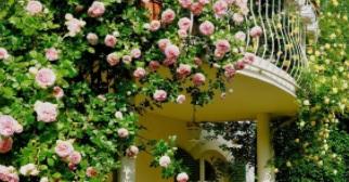 Kiderült, hol van a legszebb virágos kiskert és a legszebb virágos terasz Magyarországon