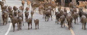 Hatalmas szarvascsordát kaptak lesre Baranyában (videó)