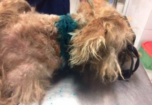 Átvágta a kutya torkát a börtönből szabadult férfi
