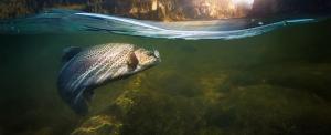 Szavazás kezdődött a 2018-as Év haláról