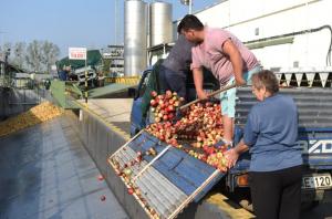 Pofon jön az almatermelőknek