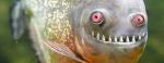 Piranhák és aligátorok Hévízen?!