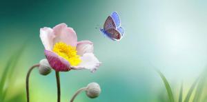 Tavaszi energiák, a test és a lélek megújulása a grafológiában