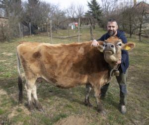 Egy hazai sajtfarm, ahol a tehenek nyugdíjba mehetnek