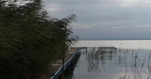 Már sejtik mi okozhatta az algásodást a Balatonnál