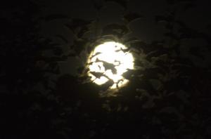Ilyen volt a misztikus, péntek tizenharmadikai Hold