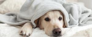 Már a kutyáknál is jelentkeznek civilizációs problémák