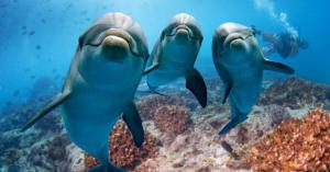 Galambokat, cicákat, delfineket is küldött titkos küldetésekre a CIA