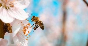 Bebizonyították, hogy a méh az egyik legfontosabb élőlény a bolygón