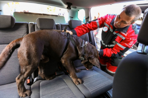 Kutyaszállítás biztonságosan