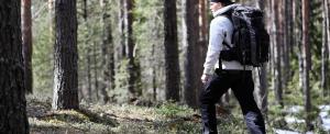 Drámai mértékben pusztulnak erdeink, a maradék fenyvesünk is eltűnik