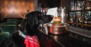 Egy csomó balatoni kutyabarát hely kapott díjat