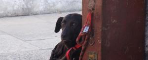 Szívtelenek: bőröndbe zárták az állatot, s ott hagyták a pályaudvaron