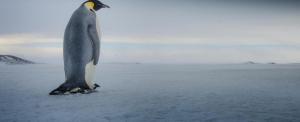 Emberméretű ősi óriáspingvint fedeztek fel Új-Zélandon