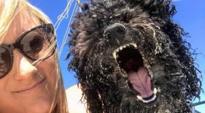 Ötmilliót kínál ez az ausztrál nő, ha valaki megtalálja a kutyáját