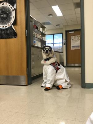 Imádja az internet a kutyát, aki védőöltözetben kíséri gazdáját a laborba