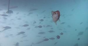 Türkiz víz, boldog halacskák – kristálytiszta a Balaton