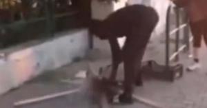 Macskát sütött magának az utcán egy migráns (videó)
