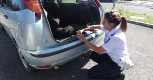Betörheti a rendőr a szélvédőt, ha a kocsiban ebet hagytak