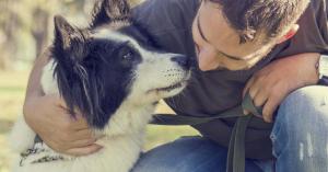 Magyar kutatók kiderítették, hogyan dolgozza fel a beszédet a kutyák agya