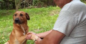 Szívbemarkoló: másfél hónapig őrizte kutyája János holttestét