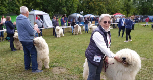 Kutyusok lepték el a Gébárti-tó környékét