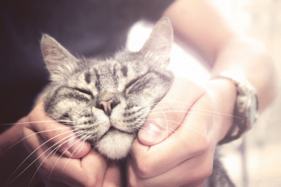 Itt a megfejtés a macskák két legfurcsább szokására
