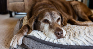 Hetekig éheztette kutyusát a kertvárosi nő