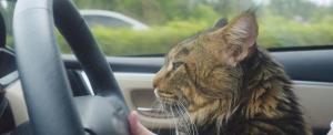 Megtámadta egy macska, majd a saját autója ütötte el