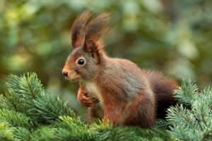 Így ugrált a mókus a tanösvényen – Videó!