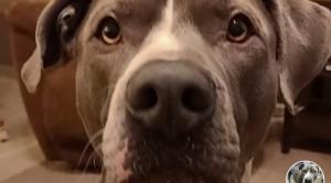 Íme a kutyus, aki beszél és azt mondja: szeretlek! videó