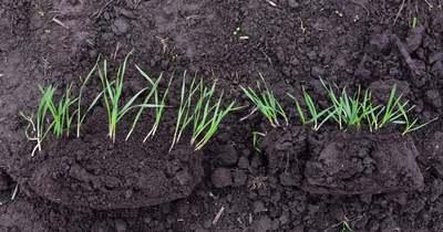 Talajbaktériumok a növénytermesztés szolgálatában