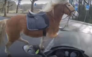 A modern cowboy robogóval fogja be az elszabadult lovat – VIDEÓ