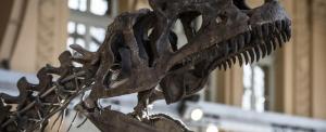 Akár ön is megveheti a ritka dinócsontvázat