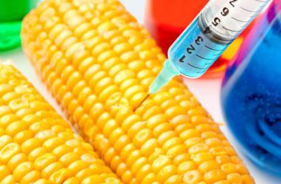 Szabad utat nyitna a génmódosított növények előtt a DK és a Momentum
