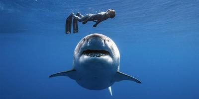 KVÍZ: Mennyit tudsz a világ legfélelmetesebb állatairól, a cápákról?