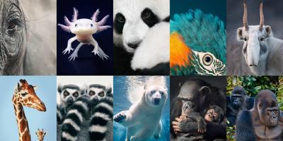 KVÍZ: Mennyire ismered az állatvilágot? - II. rész