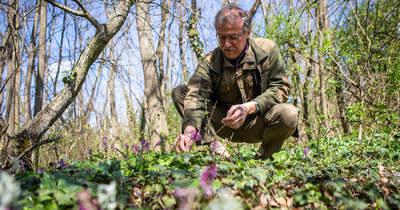 Színpompás virágba borultak Békés megye erdős részei