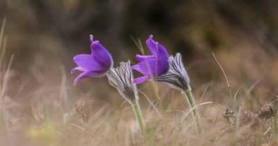 Különleges virágokat nézegetnél kirándulás közben? Itt megteheted!
