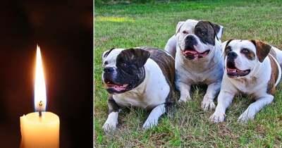 Brutális – saját bulldogjai tépték szét a háromgyerekes édesanyát