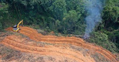 Drámaian fogy az esőerdő az Amazonasnál