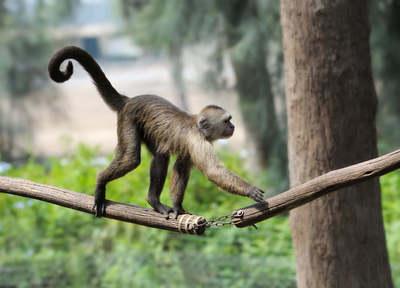 Ömlött a vér, sírt a kisfiú az állatkertben, minden egy majom miatt történt