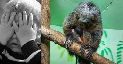 Igazán bizarr zsákmányt ejtett magának egy állatkerti majom