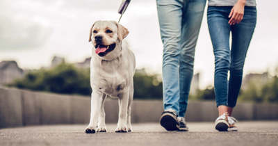 Így gyalogolj, hogy fogyj!