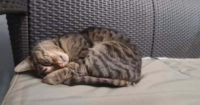 Többen aggódnak a zalaegerszegi Platán sor cicájáért