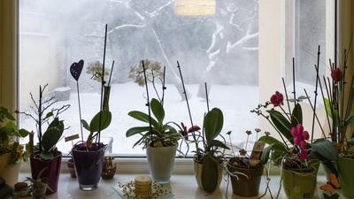 Tavasz után újra tél: erős lehűlés jön, helyenként hó is várható