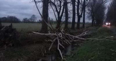 Fákat döntött ki a viharos szél a Balatonnál