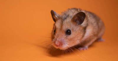 A spermidin javítja az egerek emlékezőképességét